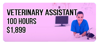 Veterinary Assistant Program